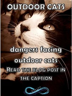 """Be Kind to Animals Week®"" (May 3-9)  This article was featured in All About Cats magazine... Making gardens cat safe are definitely on the rise which is awesome to see considering how many cats need welfare assistance.  https://infinity8eight.wordpress.com/2014/02/27/all-about-cats-dangers/"
