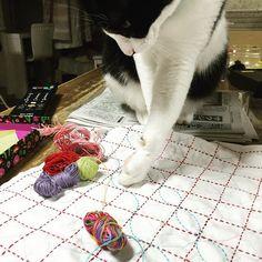 余り糸を使っている、この夏 いよいよ残りも少なくなってきた 今回はミックスで・・あっコラっ🙀 #刺し子#手芸#刺繍#手作り#ハンドメイド#手仕事#ランチョンマット#花ふきん#handmade#sewing#embroidery#stitching#kaumo#sashiko#ホビーラホビーレ#stitch#白黒猫#はちわれ#ハチワレ#taxedcat#taxedcatofinstagram#bobt#白黒#monotone#モノトーン#王子#prince#4歳#余り糸