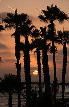 Oceanside Pier Palms, California