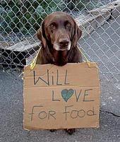A Shelter Dog's Christmas Poem