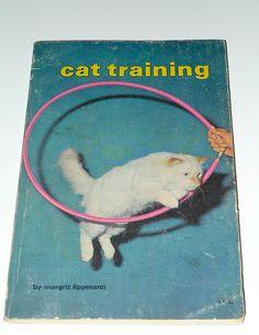 CAT TRAINING | Flickr - Photo Sharing!