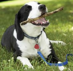homemade remedies for pets