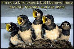 Ohhhhhhh my goodness ..... How funny is this. ??!!..... And probably really close to the truth ! Oooooooo : o ) Happy pinning ..... : )