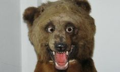 Taxidermy, You're Doing It Wrong (22 Pictures) - BANNED In Hollywood