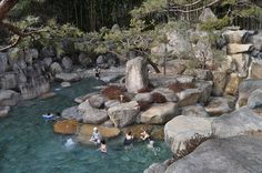 hot springs, although this could be replicated for outdoor public soaking spaces. We have pool memberships, why not spa memberships? The latter is infinitely more beneficial to relieving stress too!