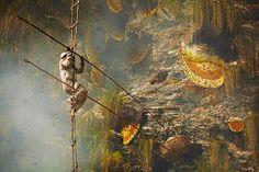 La Familia de la Apicultura - The Beekeeping of Family: Cosecha de miel en el Himalaya de Nepal - Honey harvest in the Himalayas of Nepal.