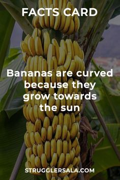Just knowing this. - All the Interesting Information You're Wondering Here Interesting Science Facts, Interesting Facts About World, Some Amazing Facts, Unbelievable Facts, Wow Facts, Wtf Fun Facts, Random Facts, Physiological Facts, Psychology Fun Facts