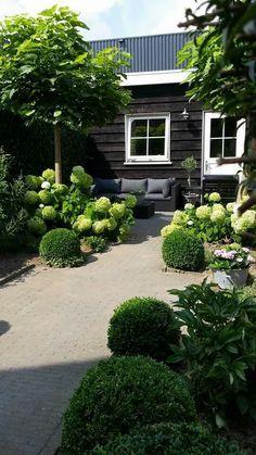 Tuin met veel hortensia's en buxussen
