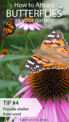 Want simple ways to attract butterflies and encourage these essential pollinators to frequent your garden? Along with monarch butterflies, these seven tips will not only encourage butterflies, but benefit the entire circle of life in your growing space.