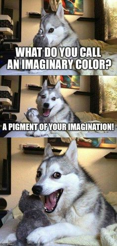 New Funny Puns Jokes Humor Laughing Harry Potter Ideas Funny Animal Jokes, Dog Jokes, Puns Jokes, Corny Jokes, Funny Dog Memes, Cute Funny Animals, Funny Animal Pictures, Animal Memes, Puns Hilarious