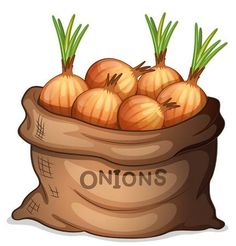 A sack of onion stock illustration. Illustration of food - 36748989 Apple Baskets, Adult Coloring Book Pages, Food Pyramid, Food Illustrations, Drawing For Kids, Recipe Cards, Craft Fairs, Decoupage, Flora