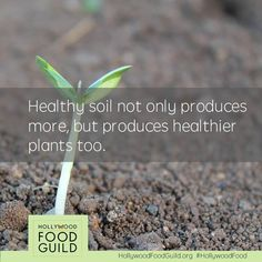 Healthy soil = healthy plants. Join Hollywood Food Guild to get facts about our food supply and food production.