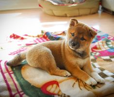 Most Popular Puppy Names of 2013