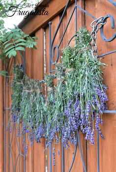 How to harvest and dry lavender from your garden with helpful tips.You can find Harvesting lavender and more on our website.How to harvest and d. Lavender Uses, Lavender Crafts, Dried Lavender Flowers, Growing Lavender, Lavender Garden, Growing Herbs, Lavender Fields, How To Plant Lavender, Lavender Potted Plant