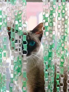 Foto KT Cat