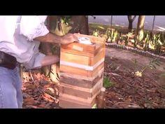 Presentamos nuestro primer capítulo sobre abejas meliponas en Colombia,Camino al Agro ofrece todo tipo de videos agropecuarios y el servicio de grabación de ...