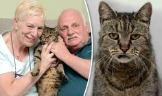 VETERAN tabby Nutmeg has outlived all of his nine lives to become the world's oldest cat at the grand old age of 31.