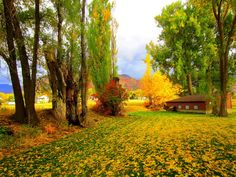 Fall... Cache Valley, Utah
