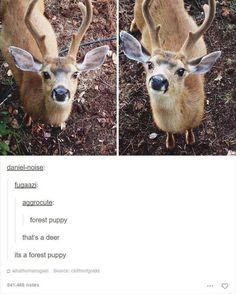 FOREST PUPPY