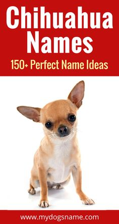 150+ awesome Chihuahua name ideas. You'll love these names perfect for a tiny tot. Dog names don't get better than this!