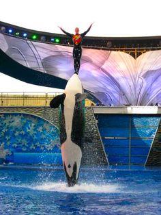 Sea World ~ Orlando  Shamu Show ~ Believe  Summer 2009