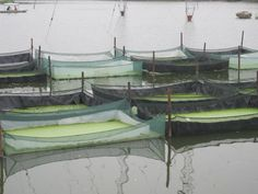 cultivating duckweed in enclosed areas