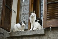 cybergata:  At the window by StePagna on Flickr.