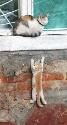 A little help over here, please ? http://sulia.com/my_thoughts/753539d2-76c4-4e5a-8b19-ccc18134387c/?source=pin&action=share&btn=small&form_factor=desktop&pinner=125399453