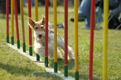 Dog 101   Activities & Fun   Games & Competition   Organized ...