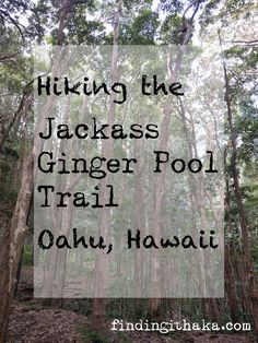 The Jackass Ginger Pool Trail in Hawaii is more officially known as the Judd Memorial Trail, so if you see signs for that, you're on the right path. The trail is right off of the Pali Highway, so it's not too hard to find. It's short, only about a mile, but it involves a few stream crossings, which can be tricky and slippery. It brings you to a beautiful pool.