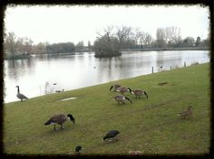 Billericay, Essex, England 03/2013 ~SMS~