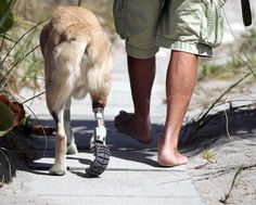 A friend is not who knows you the longest, but the one who came and never left your side.     For Cassidy the dog, it was Steve and Susan Posovsky, who never left his side. Read their story and watch the video here: http://www.dogheirs.com/tamara/posts/2130-three-legged-rescue-dog-a-pioneer-for-artificial-limb