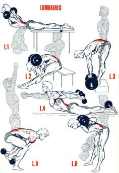 Back Workouts exercises