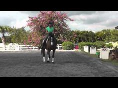 How To Ride Travers (Haunches-In) - The Thinking Equestrian