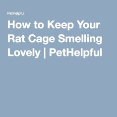 How to Keep Your Rat Cage Smelling Lovely | PetHelpful