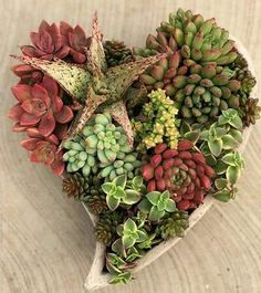 Succulents Online, Succulents In Containers, Cacti And Succulents, Planting Succulents, Cactus Plants, Planting Flowers, Air Plants, Succulent Landscaping, Succulent Gardening