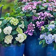die besten 25 arten von hortensien ideen auf pinterest hortensie hortensien und welche. Black Bedroom Furniture Sets. Home Design Ideas