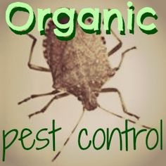 organic pest control- keeping everything from deer and rabbits to squash bugs and ants out of your garden!