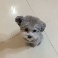 Doggy Shops (@DoggyShops) | Twitter