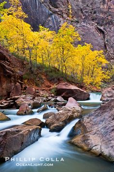~ Fall in Zion's ~ Utah....photo by Phillip Colla