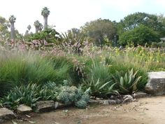 Small Garden Ideas In South Africa south african indigenous ornamental grasses - google search