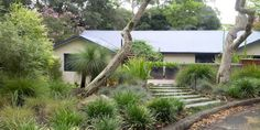 Andrew Davies Australian garden Use of native grass gives birds seeds to eat