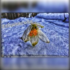 Moth, Insects, Animals, Nature, Flowers, Animales, Animaux, Animal, Bugs