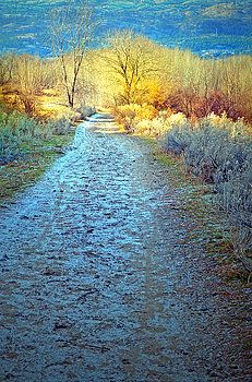 The Frosty Trail by Tara Turner