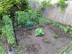 June 23, 2017 - Gardening is easy when you have a plot of land to do it. For years, I was stuck container gardening. It worked, but it wasn't perfect. Last year I even wen