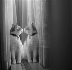 """""""One cat just leads to another."""" --Ernest Hemingway"""