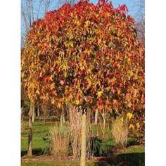 Die 41 besten bilder von abgrenzung zum nachbarn baum oder spalier trellis tree structure - Gartenpflanzen straucher ...