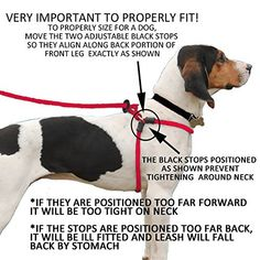 Harness Lead Escape Proof Reduces Pull Dog Harness Medium/Large Blue -- You can get more details by clicking on the image. (This is an affiliate link) Dog Harness, Dog Leash, Brain Training, Dog Training, Pet Shop, Choosing A Dog, Dog Health Care, Dog Boutique, Dog Supplies