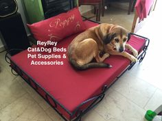 Dog Beds, Pet Supplies, Cats, Gatos, Pet Products, Dog Bed, Cat, Pet Accessories, Kitty