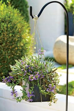 A modern mix of succulents and purple fan flower makes a statement